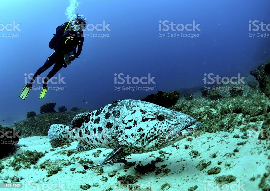 Girl and her Grouper stock photo