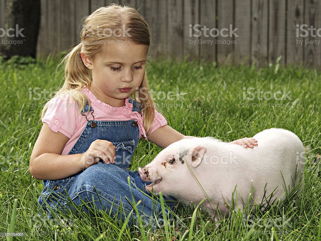 Girl and her Pig stock photo