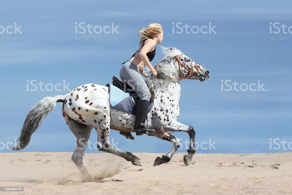 Girl and spotted horse royalty-free stock photo