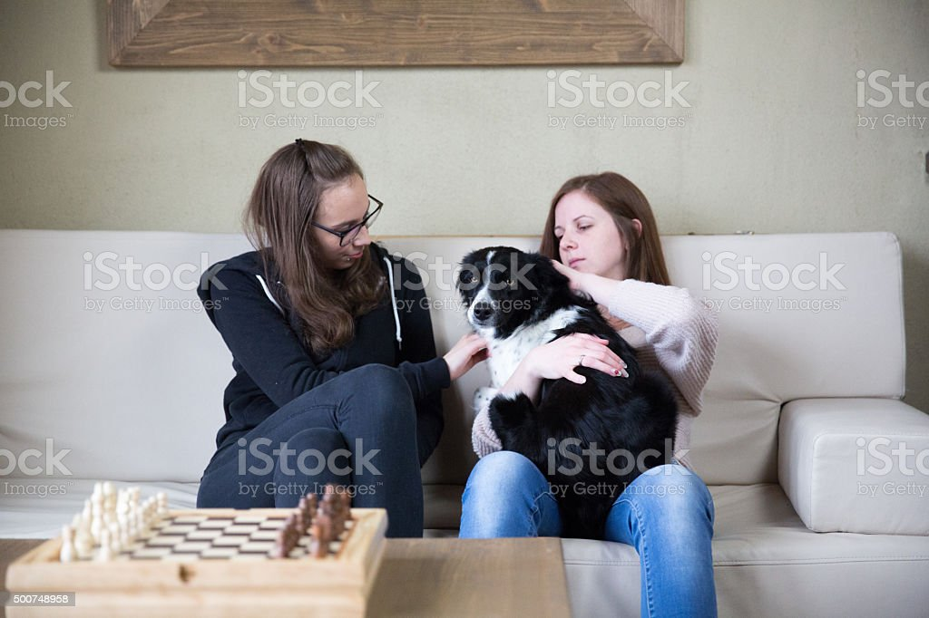 Girl and the dog stock photo