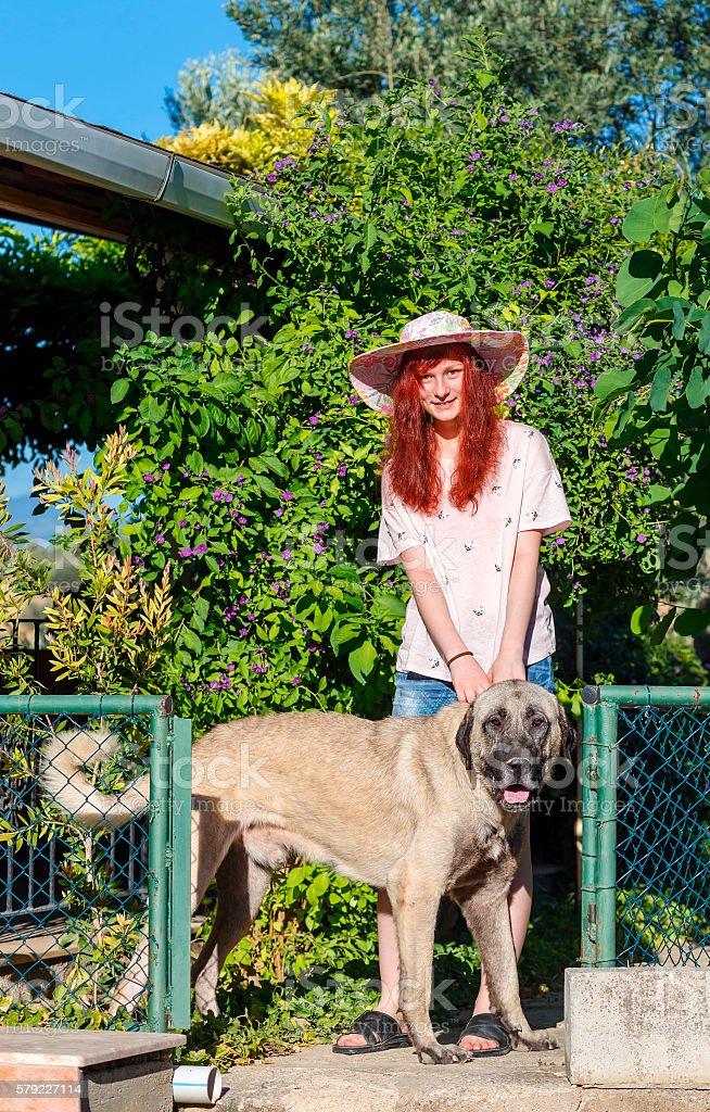 girl and Turkish Kangal stock photo