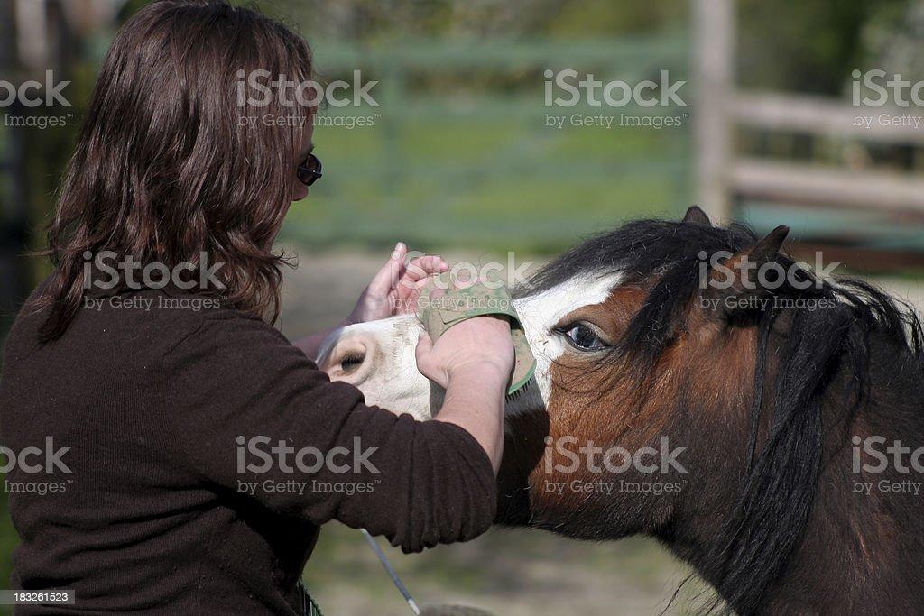 Girl Brushing a Horse royalty-free stock photo