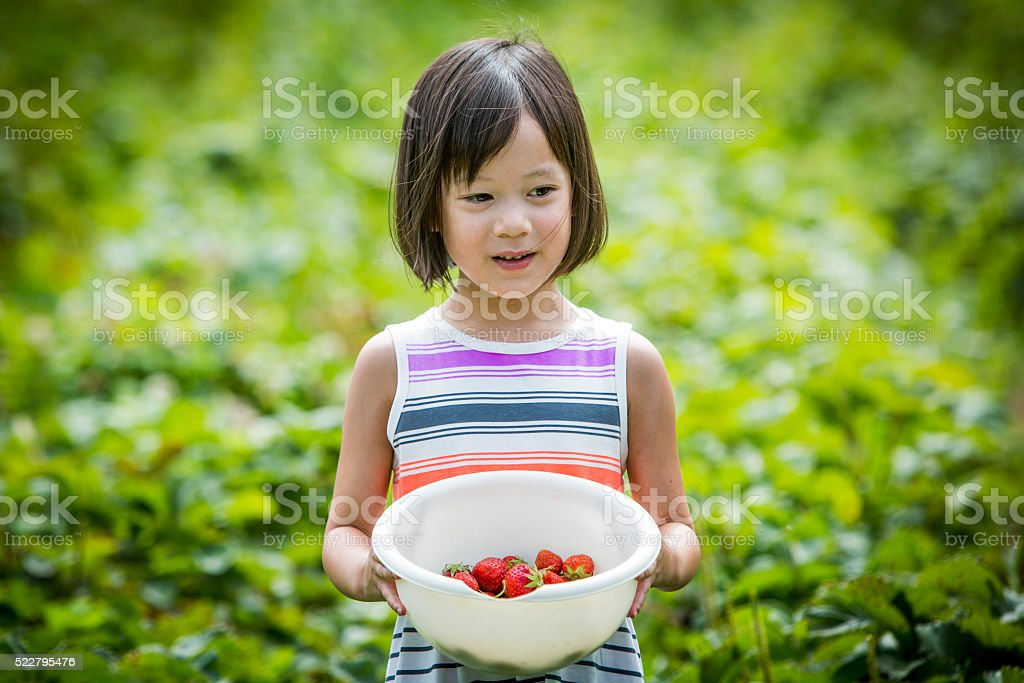 Girl carrying basket of freshly picked strawberries. stock photo