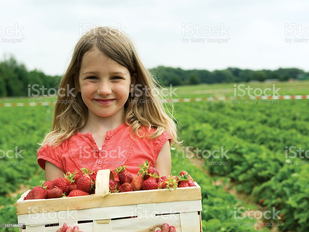 Girl carrying box of strawberries in a field stock photo
