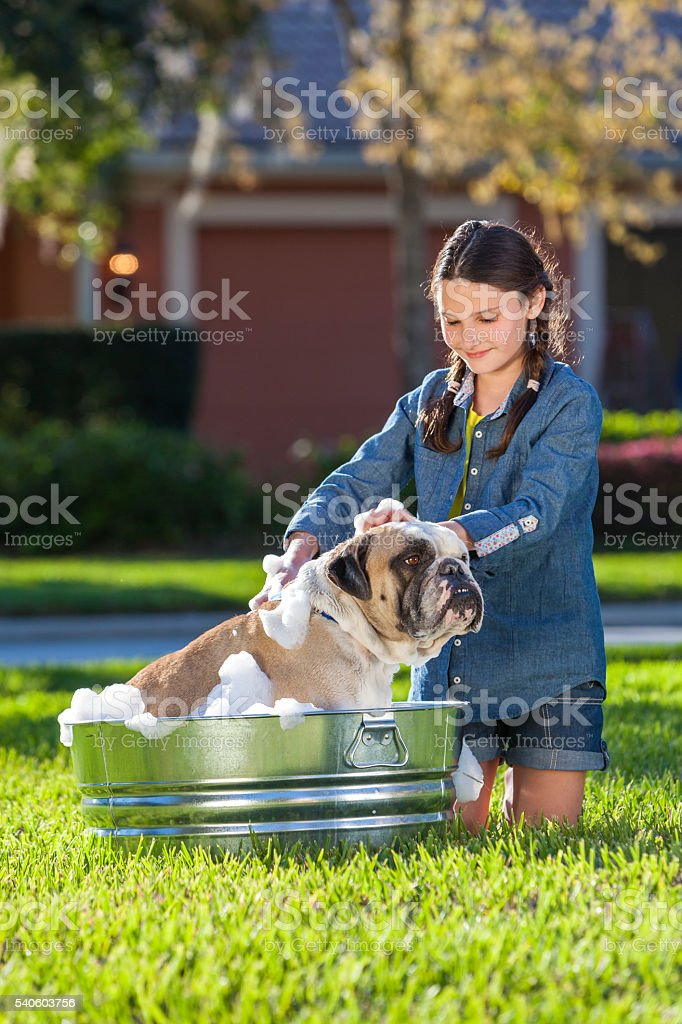 Girl Child Washing Her Pet Dog In A Tub stock photo