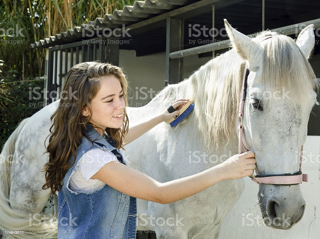 Girl cleaning her horse stock photo