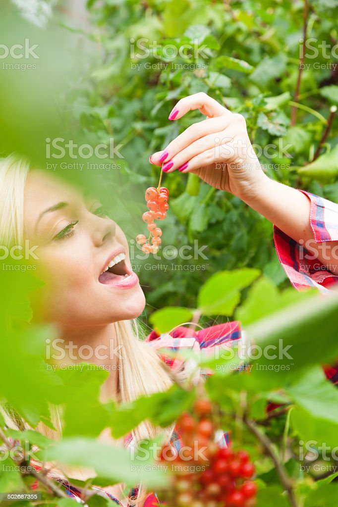 Girl Collecting Summer Fruit - Red Currants stock photo