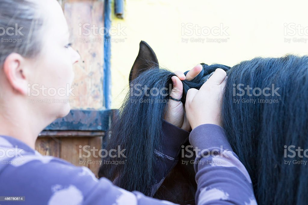 girl combing a horse mane stock photo