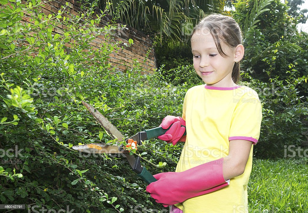 girl cuts the plants stock photo