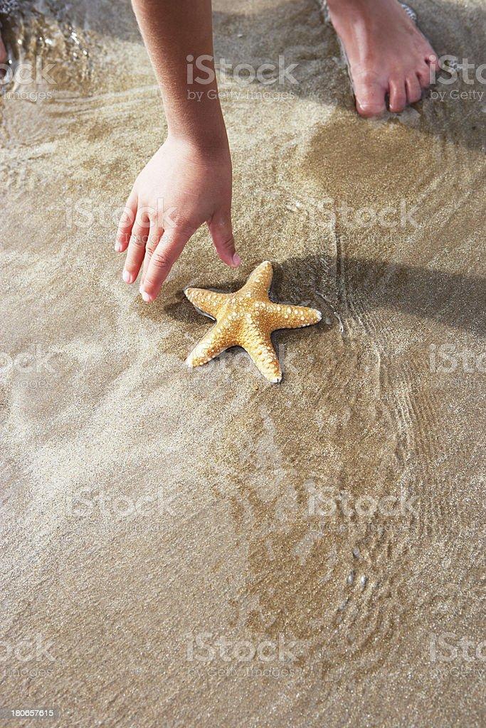 Girl Discovering Starfish On Beach stock photo