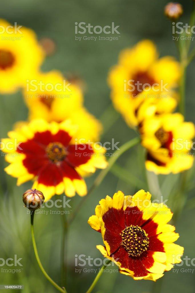 Girl eye flowers stock photo