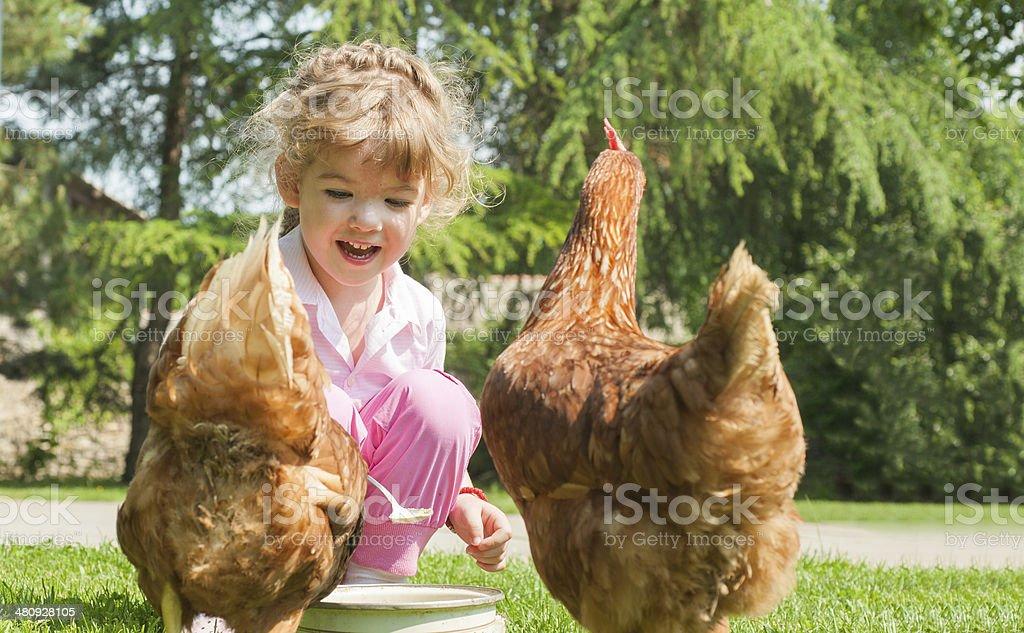 Girl feeding chickens stock photo