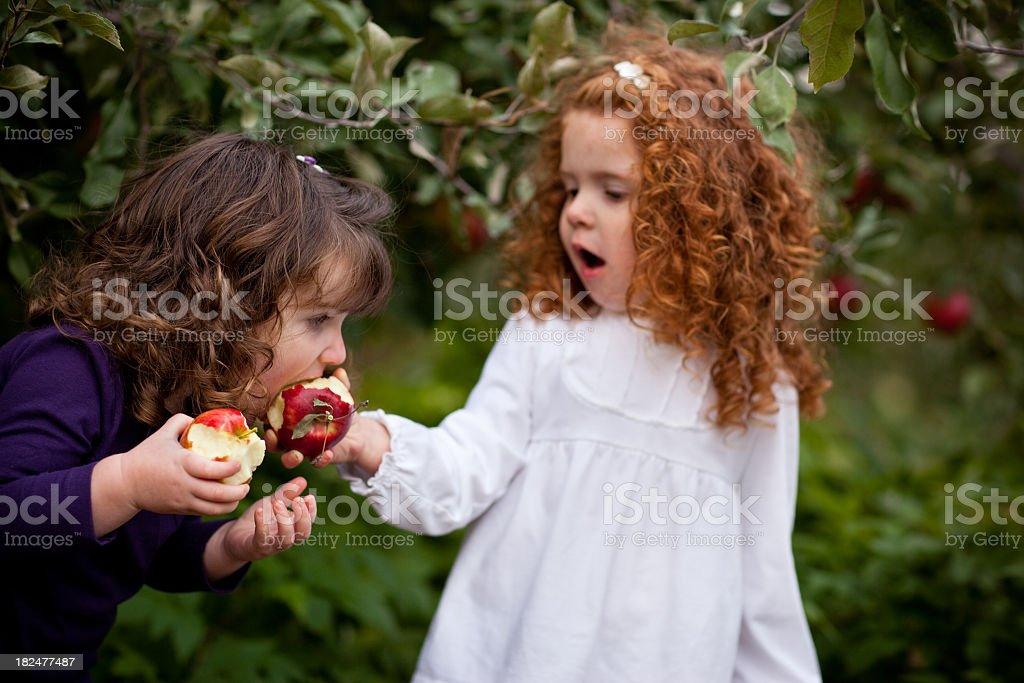 Girl Feeding Her Sister an Apple from Tree in Orchard royalty-free stock photo