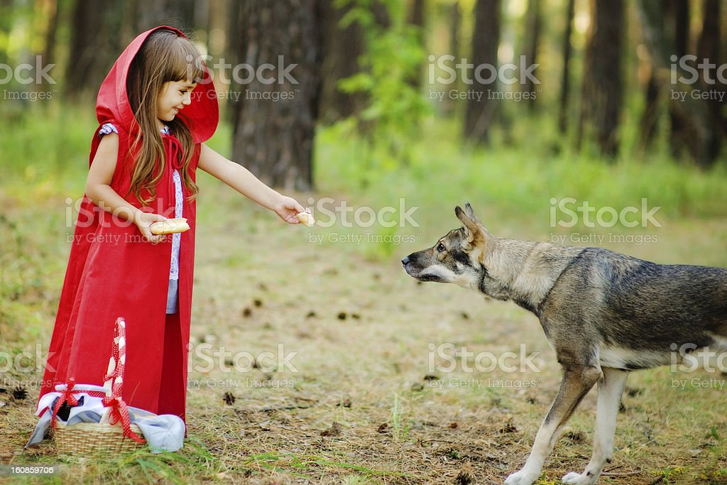 girl feeds a wolf royalty-free stock photo