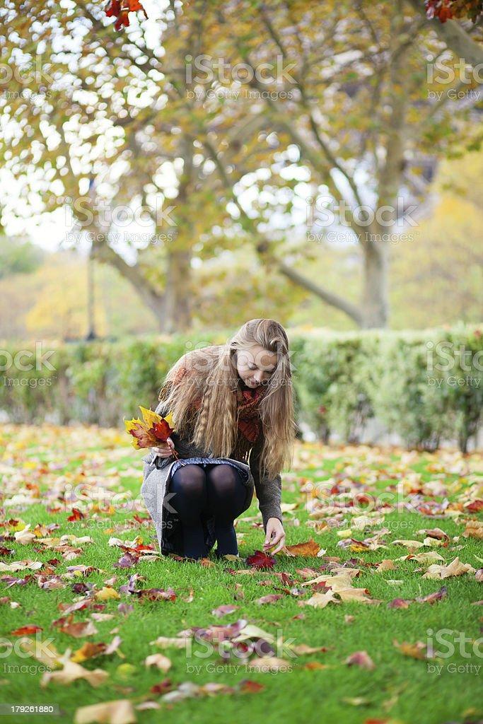 Girl gathering autumn leaves royalty-free stock photo