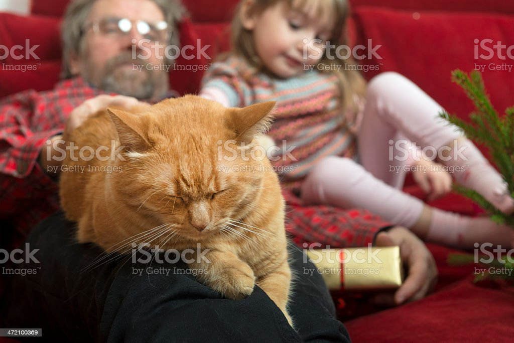 Girl, Grandfather and Cat Resting, Christmas Time, Europe stock photo