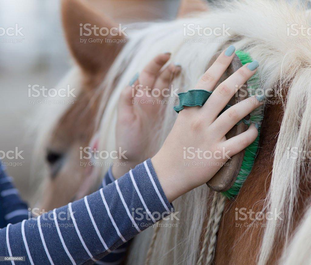 Girl grooming horse stock photo