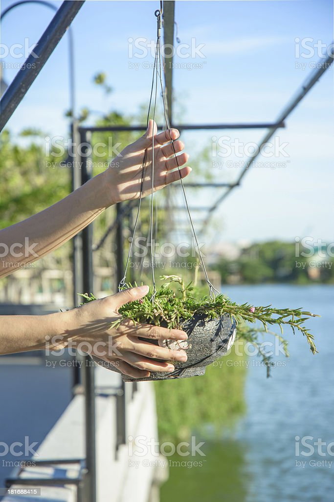girl hand hold plant in black baked clay royalty-free stock photo