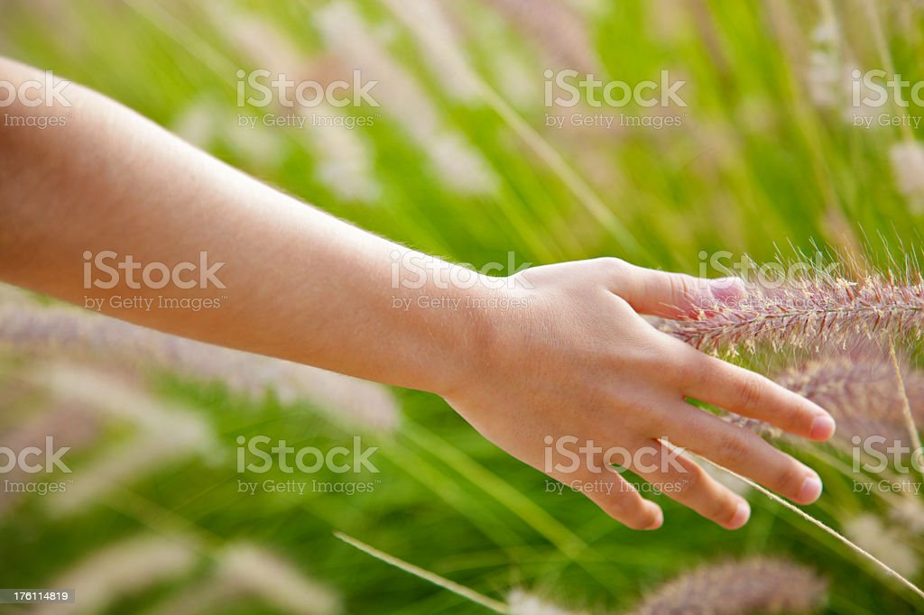 Girl hand touching grass royalty-free stock photo
