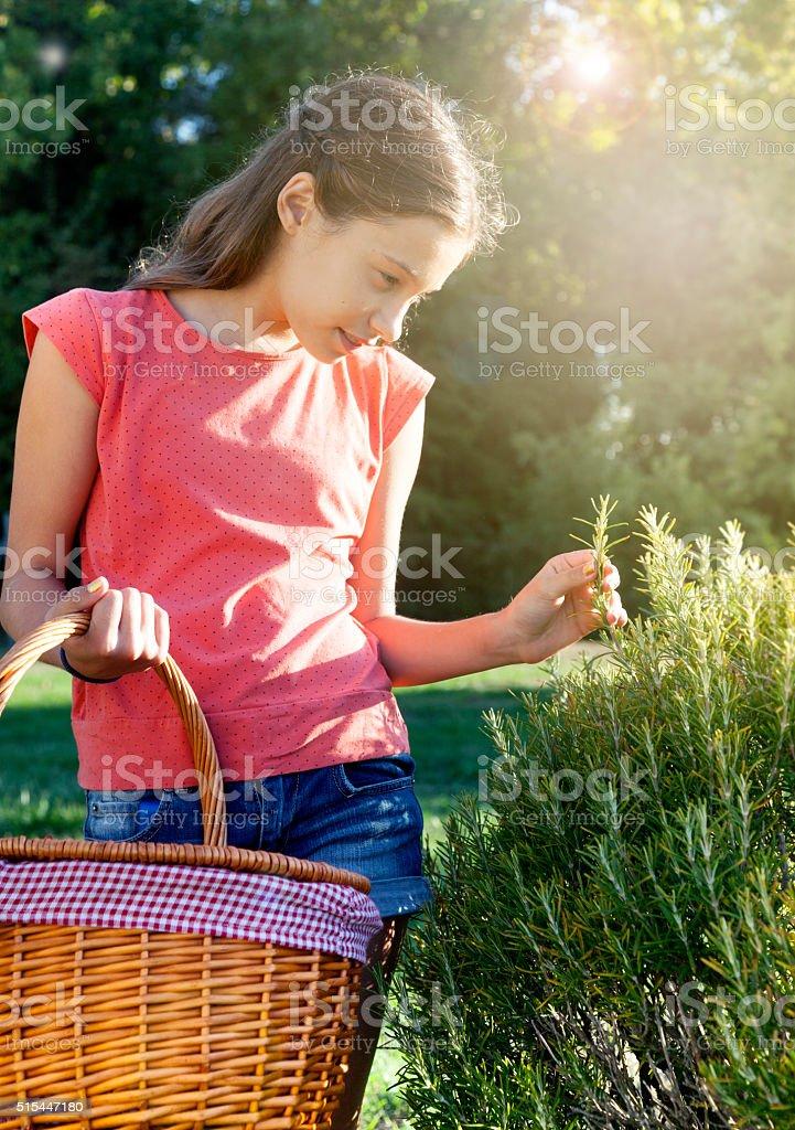 Girl harvesting plants stock photo