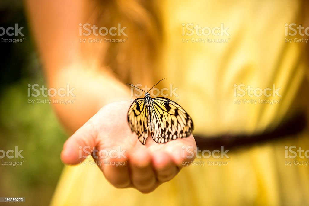 Girl has a butterfly in her hand stock photo