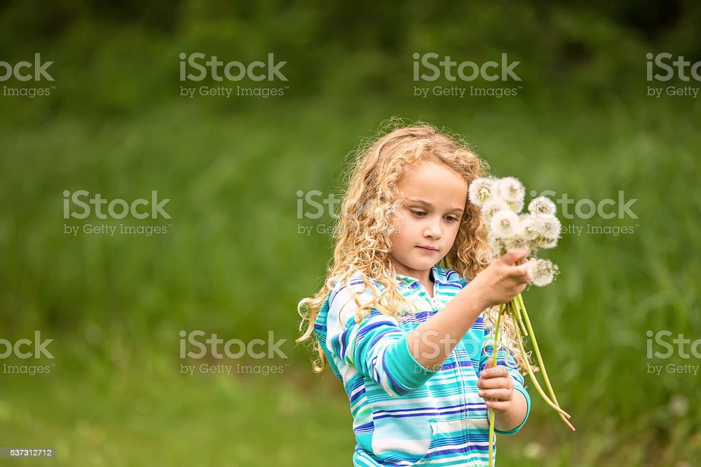 Girl Holding Bouquet of Fuzzy Dandelions stock photo