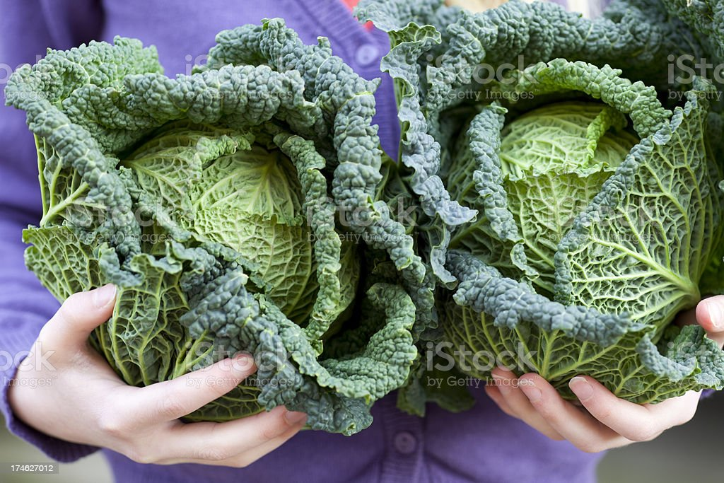 Girl Holding Cabbages stock photo