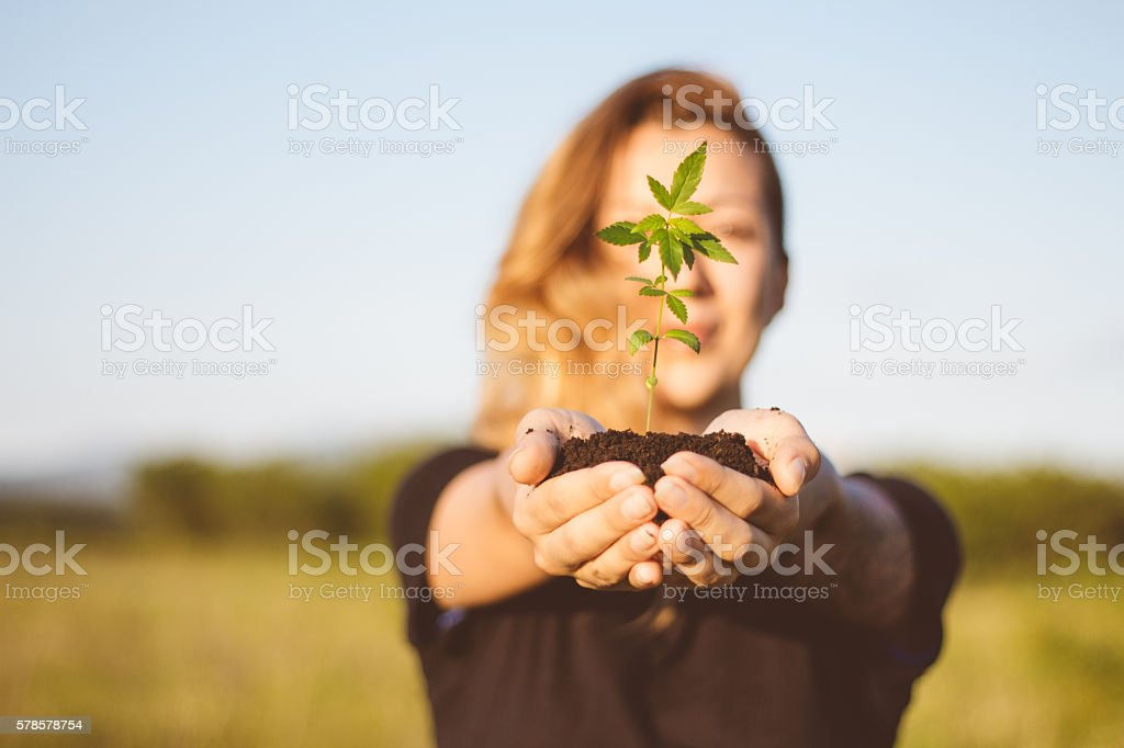 Girl holding cannabis plant outdoor stock photo
