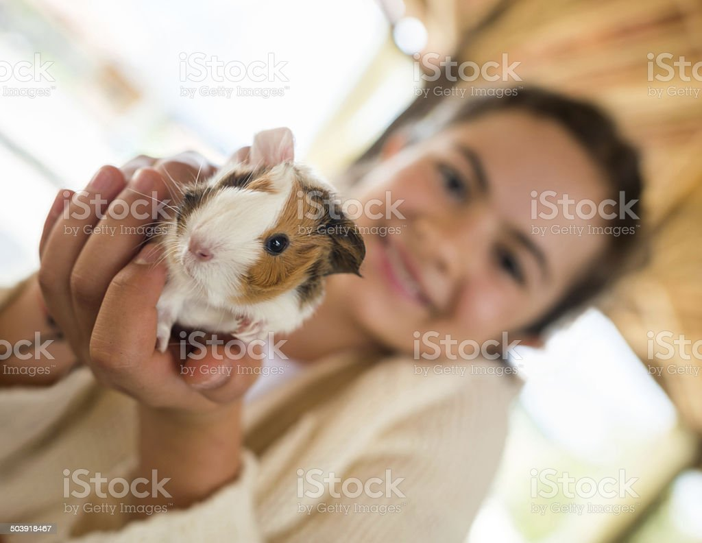 Girl holding guinea pig stock photo