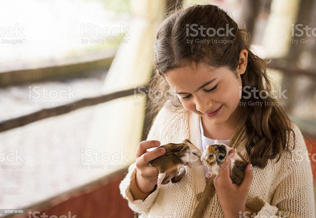 Girl holding guinea pigs stock photo