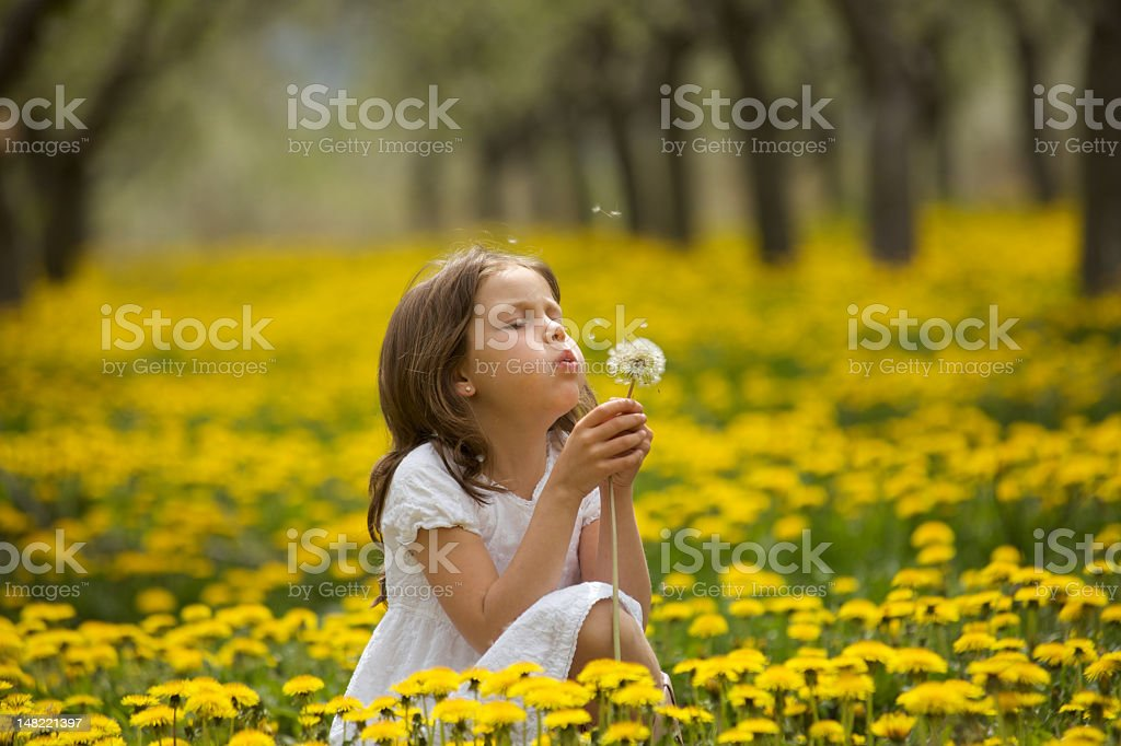 Girl in a field of yellow flowers blowing dandelion seeds stock photo