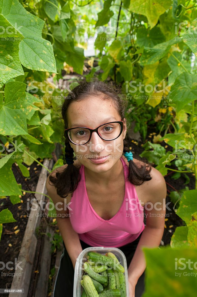 Girl in a greenhouse with cucumbers stock photo