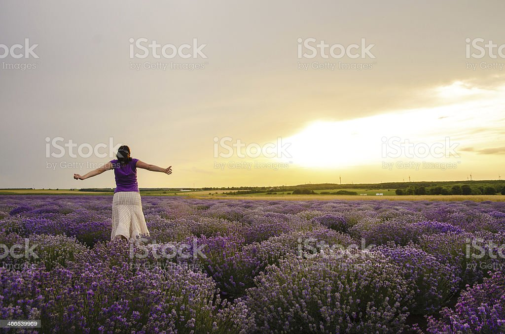 Girl in a lavender field. stock photo