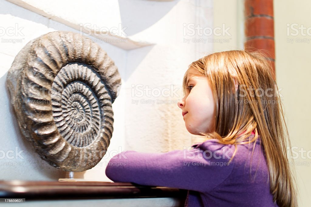 Girl in a museum studying a fossil stock photo