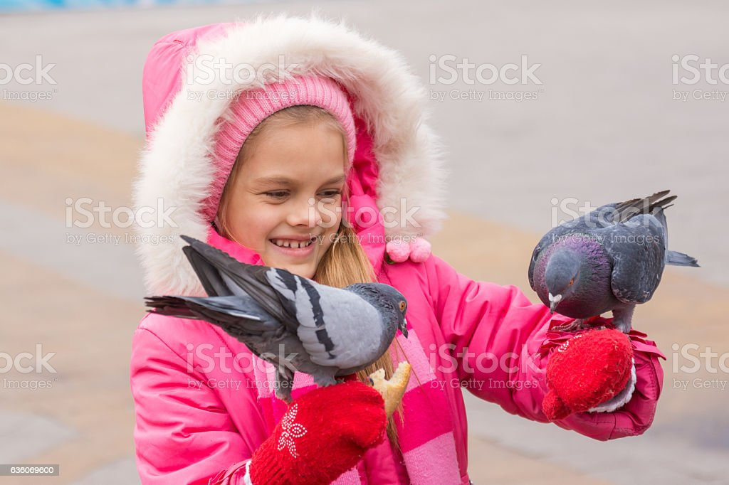 girl in a pink jacket is feeding bread pigeons hands stock photo