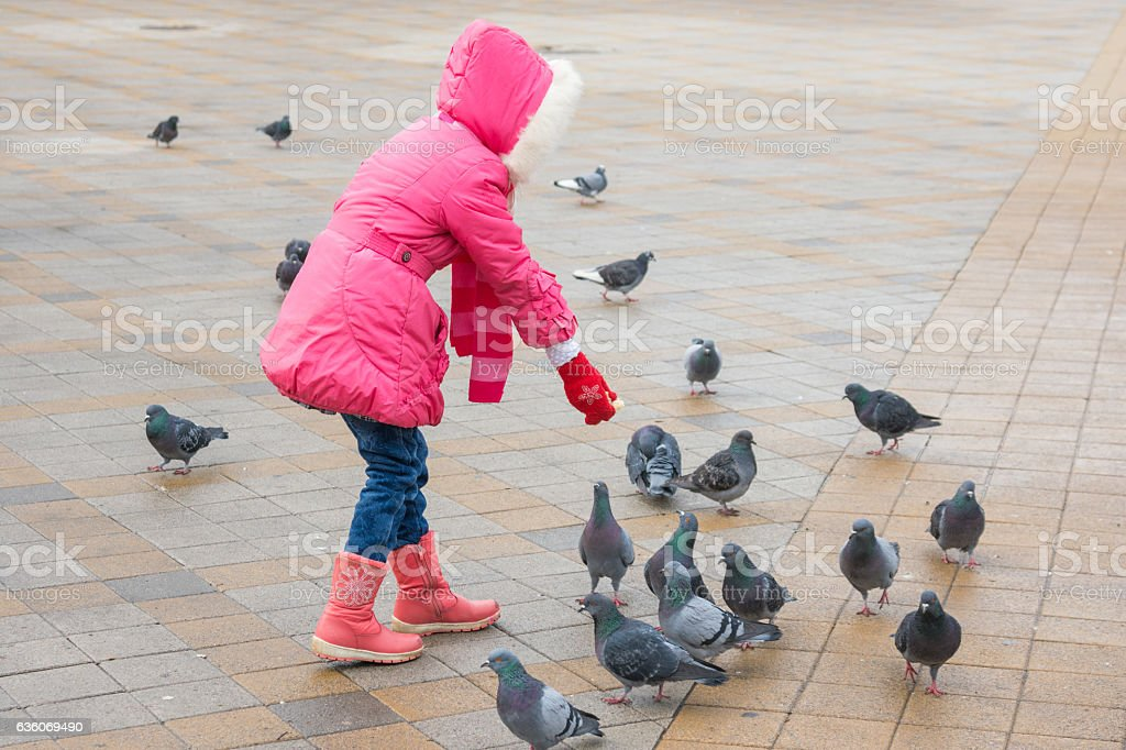 girl in a pink jacket is feeding bread pigeons Square stock photo
