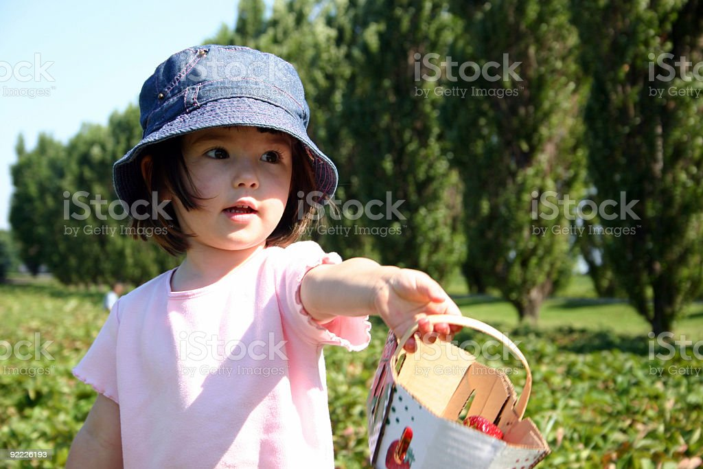 Girl in a strawberry field royalty-free stock photo