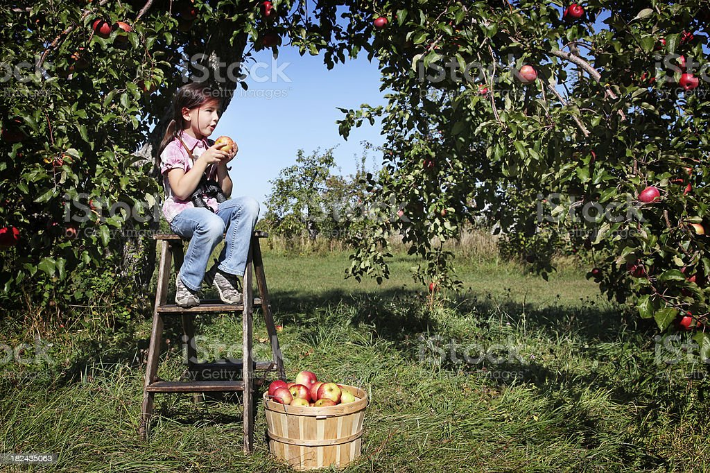 Girl in an apple orchard under blue sky royalty-free stock photo