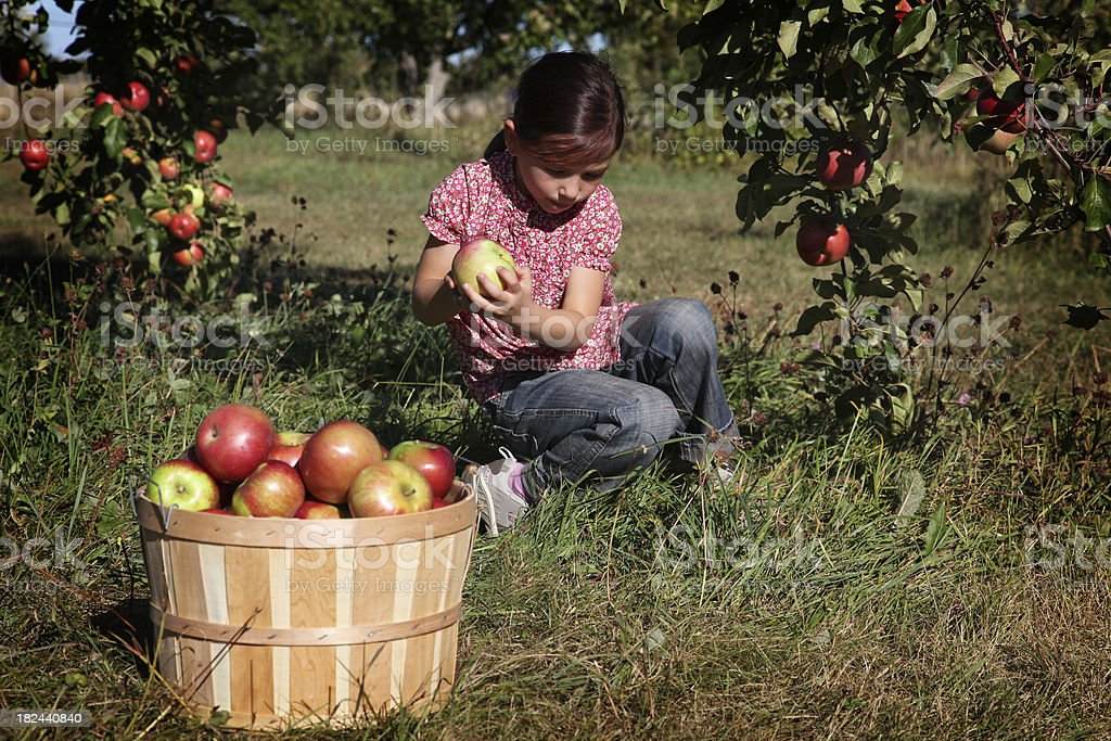 Girl in an orchard royalty-free stock photo