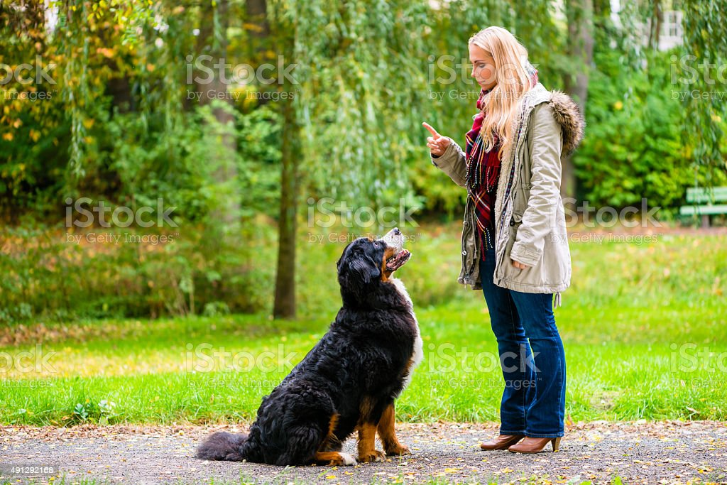 Girl in autumn park training her dog in obedience stock photo