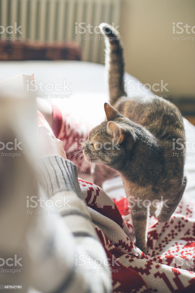 Girl in bed reading a book with her cat stock photo