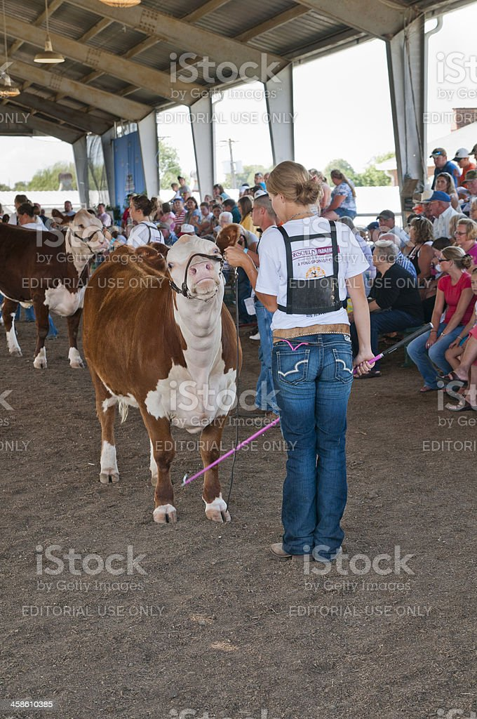 Girl in Livestock Competition with Cow stock photo