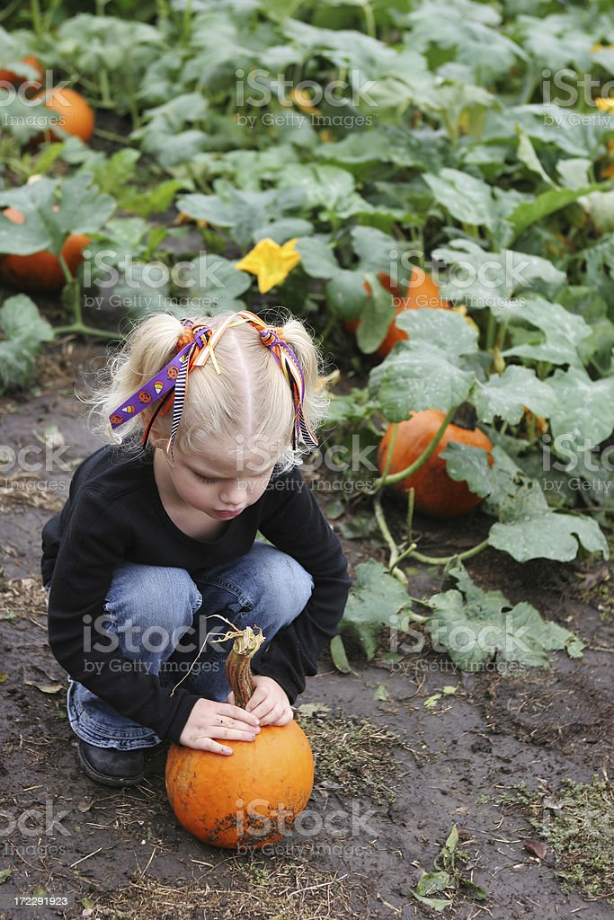 Girl in Pumpkin Patch royalty-free stock photo