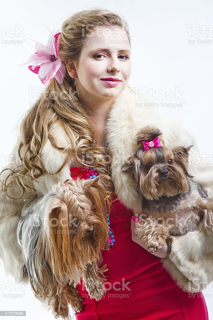 Girl in red with two yorkshire terriers on white royalty-free stock photo