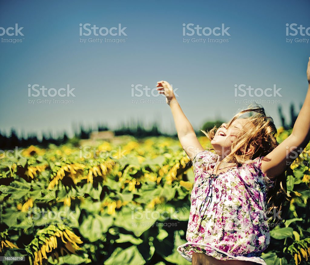 Girl in the field of sunflowers stock photo