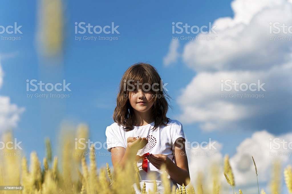 girl in wheat field holding grains in hands stock photo