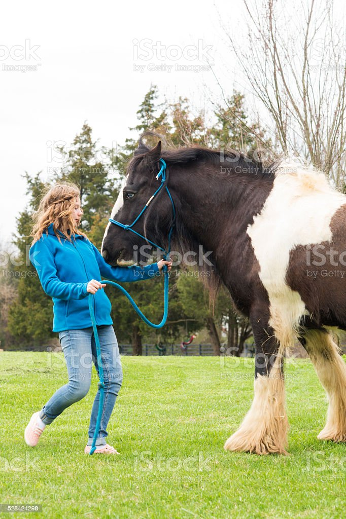 Girl interacts with rare horse stock photo