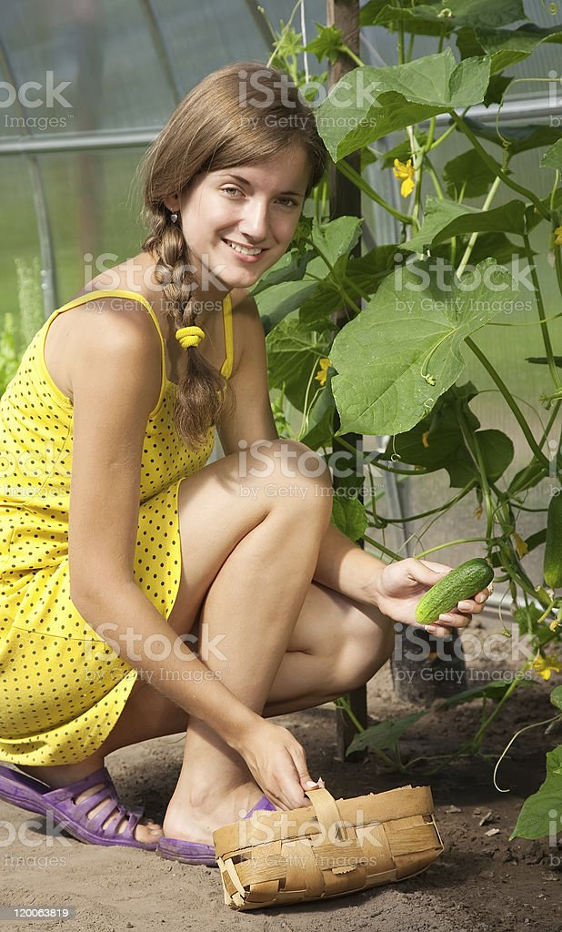 girl is picking cucumber royalty-free stock photo