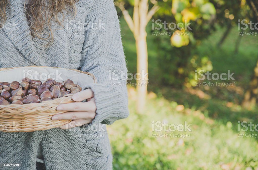 Girl keeping a basket of chestnuts royalty-free stock photo