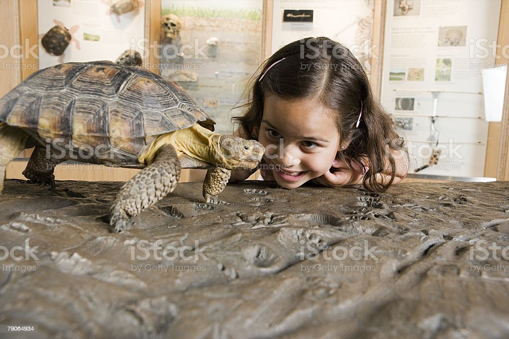 Girl looking at tortoise stock photo